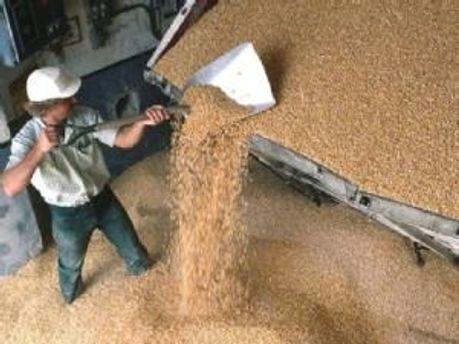Зерно отпустят продавать иностранцам