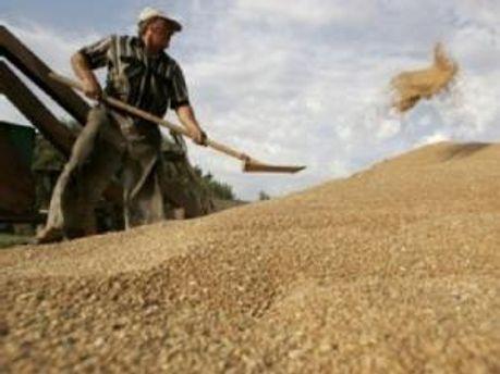 Украинское зерно может закупить Япония