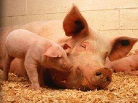 М'ясо можна буде придбати за спеціальні гроші
