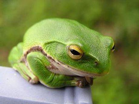 Лягушка жила в салате почти неделю