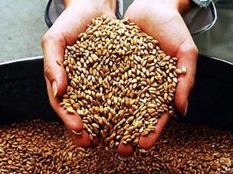 Экспортный потенциал - 20 миллионов тонн зерновых