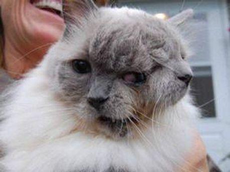 Двумордый кот Фрэнк и Луи