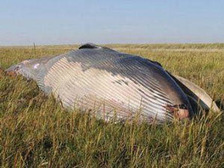 Возможно кит так сделал из-за изменения температуры