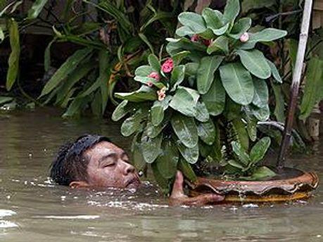 Вода затопила 270 тысяч гектаров