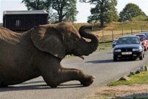 Слона разморила нетипичная октябрьская жара