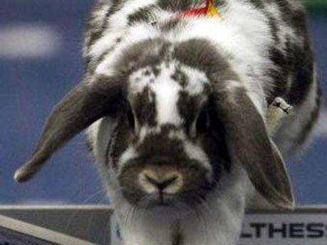 Кролик-чемпион