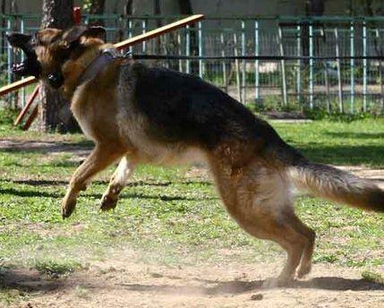 За длительный лай собаки придется заплатить от 250 до 1000 долларов
