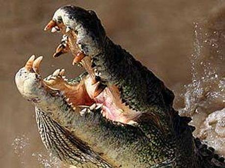 Обама буде застрахований на випадок нападу крокодилів