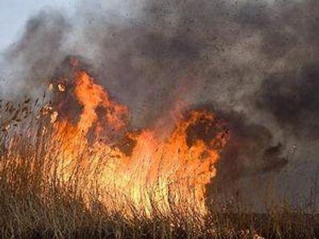 Пожарная техника не может добраться в заболоченную местность