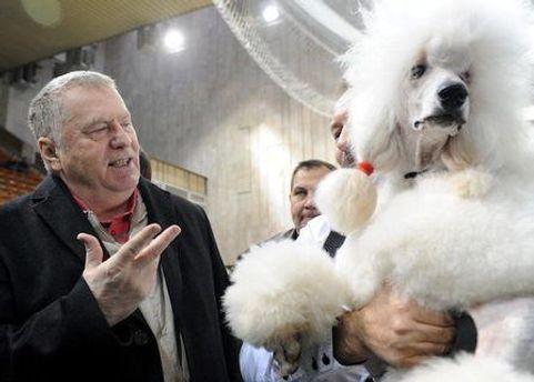 Володимир Жиріновський пропонує реєстрацію домашніх тварин