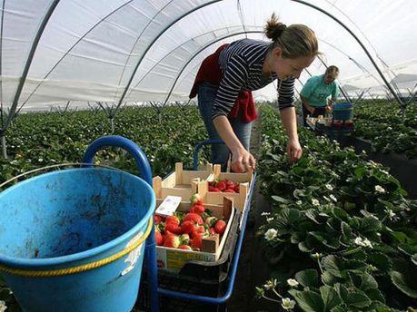 Мигрантам могут продлить срок поиска работы