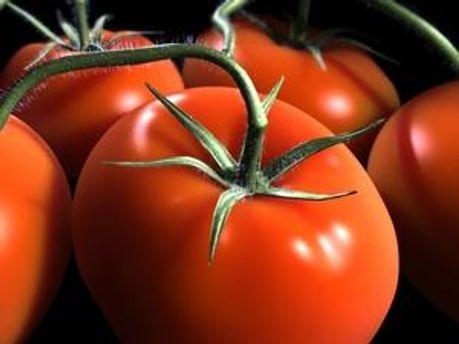 Новый сорт помидоров рекомендуют продавать гроздьями