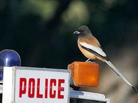 Місцева поліція готова до переговорів