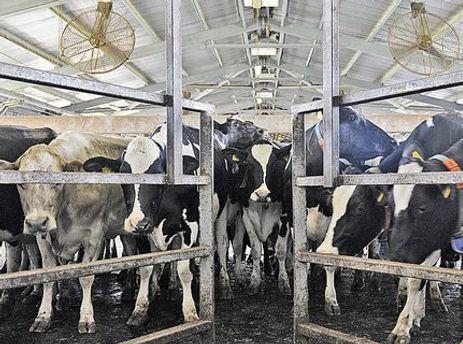 Азаров: Поголовье скота за 20 лет уменьшилось впятеро