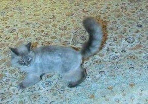 Кіт Дмитра Медведєва