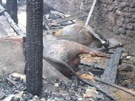 В огне сгорели более 150 животных