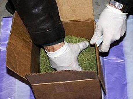 Конопля у коробці