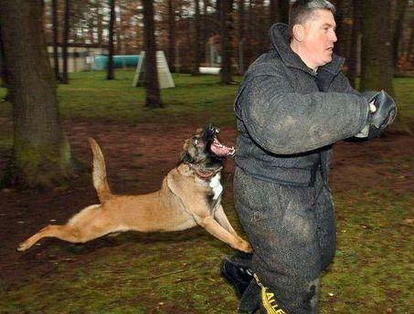 Количество нападений собак возросло