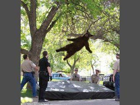Ведмідь впав з дерева кумедно