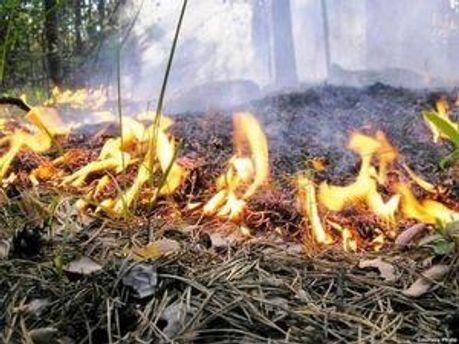 Депутат обгорел в лесу