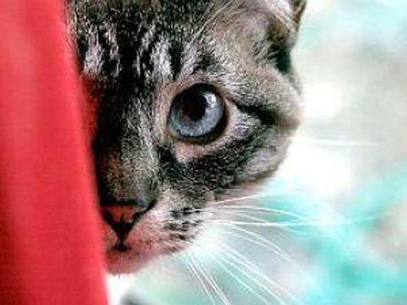 Кішки та собаки можуть гуляти вночі