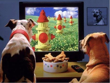 Для собак створили телеканал