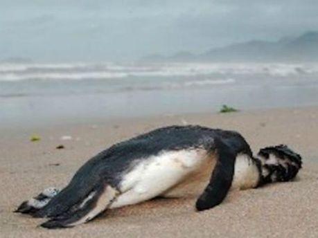 Мертвий пінгвін