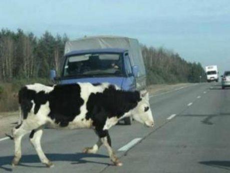 Причиной аварии стала корова