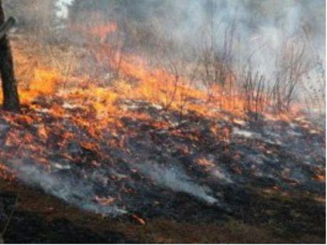 Пожар в заповеднике
