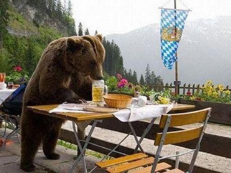 Ведмеді випили 100 банок пива