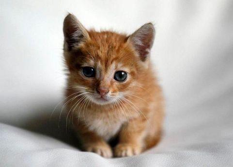 Кот Нацик в детстве