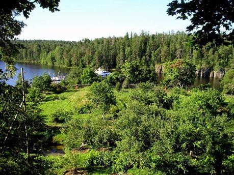 Ліси Карелії