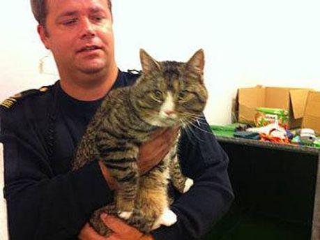 Затриманий кіт
