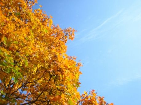 У жовтні обіцяють тепло