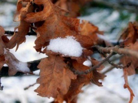 Випаде сніг