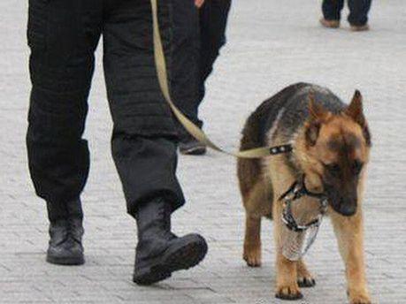 Кінолог із собакою