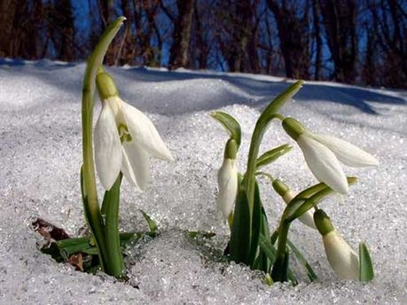 Прийшла весна