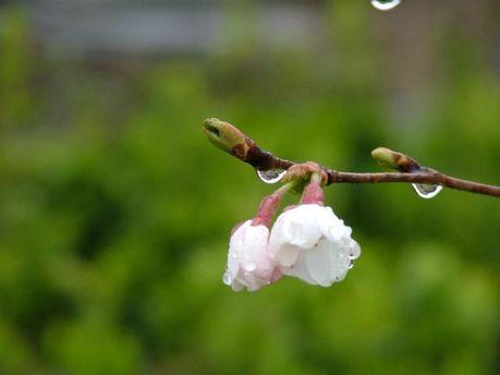 Весна. Ілюстрація