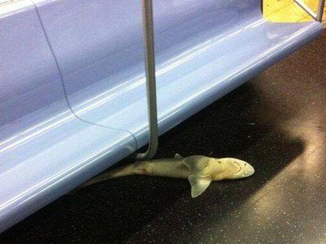 Мертва акула у метро