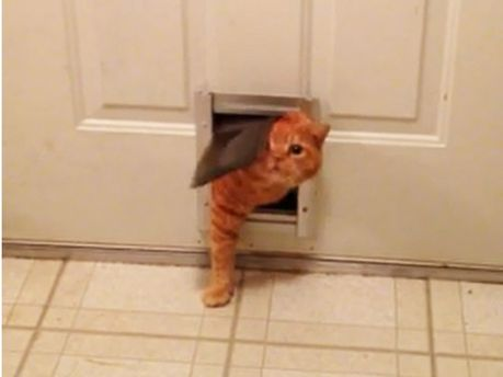 Котик пролезает в дверь