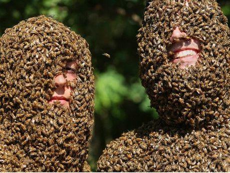 Мірялися бджолиними борода