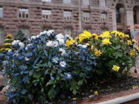 Пофарбовані хризантеми