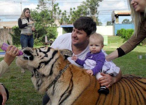 Внучка Борхеса катается на тигре с помощью дедушки