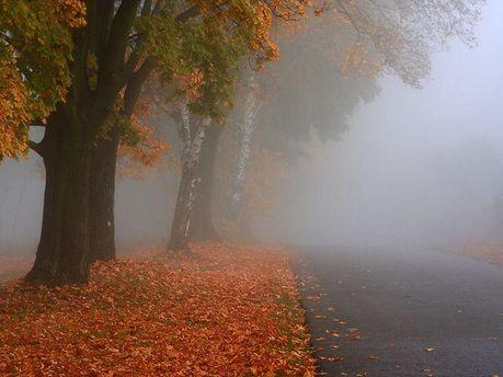 Дощ і туман