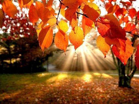 Осеннее тепло