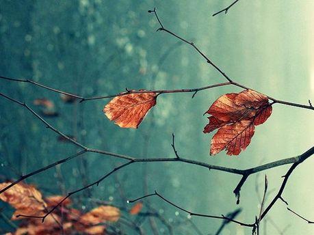 Холодна осінь