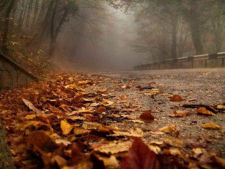 Туманная осень
