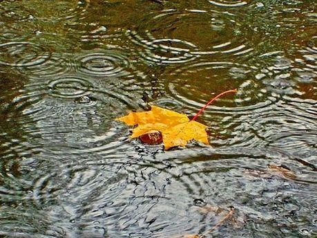 Дождевая осень