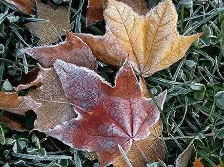 Осенний мороз