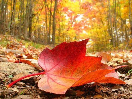 Тепла осінь